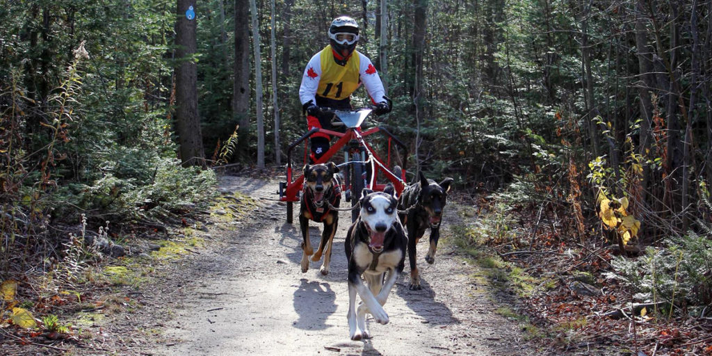 MacGregor Point Dryland Sled Dog Derby 2017 Race Results