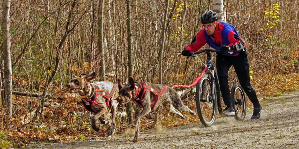 SSASO MacGregor Point Dryland Sled Dog Derby - 2 dog canicross race registration