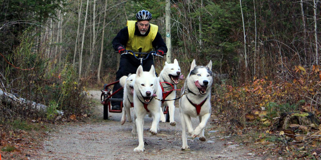 MacGregor Point Dryland Sled Dog Derby 2016 Race Results